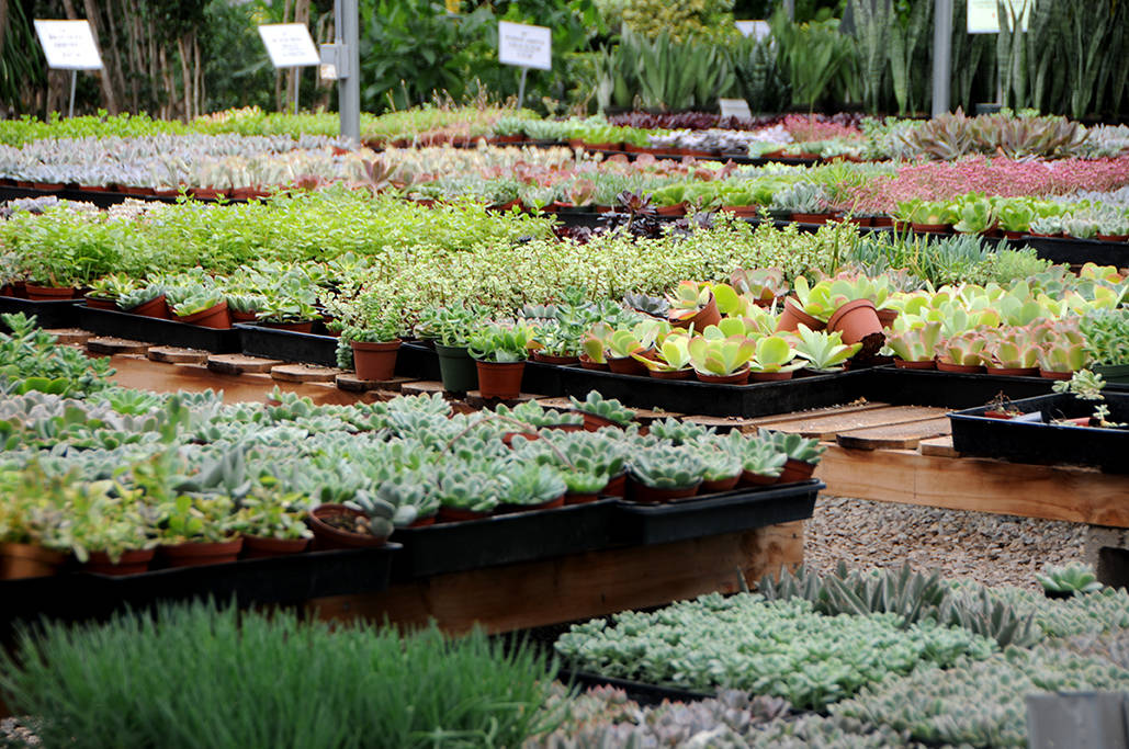 Wholesale Succulent Nursery: Orange County, Los Angeles & San Diego
