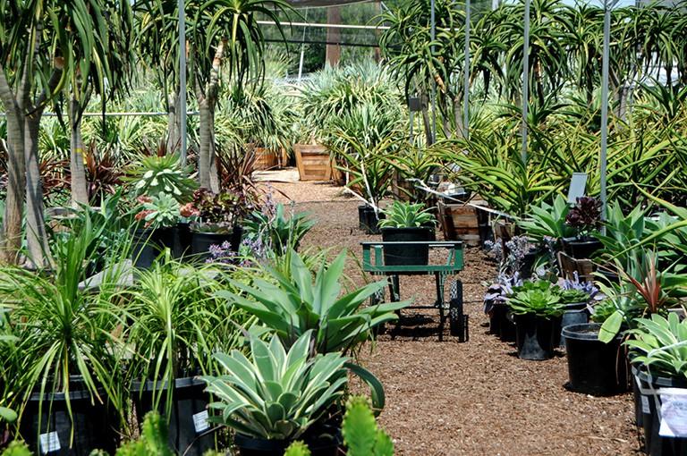 Wholesale Succulent Nursery: Orange County, Los Angeles ...