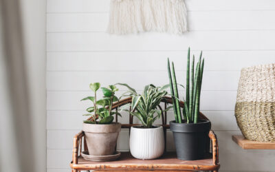 The Best Houseplant for Every Plant Parent Type