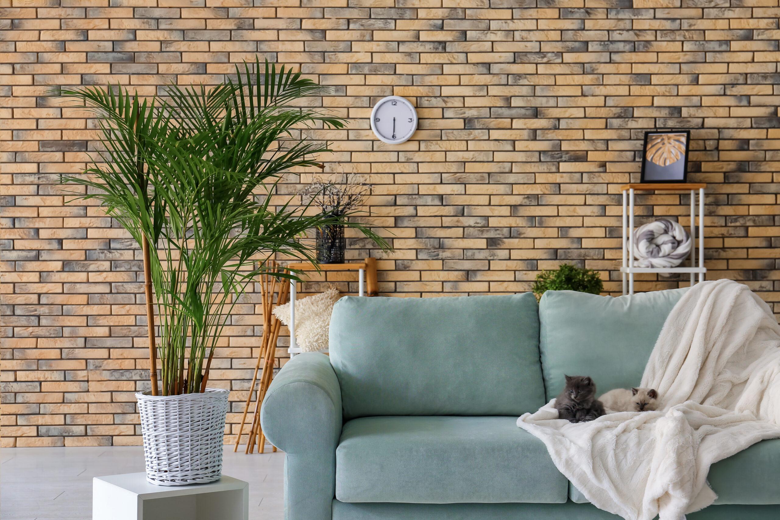pet friendly houseplants oc succulents