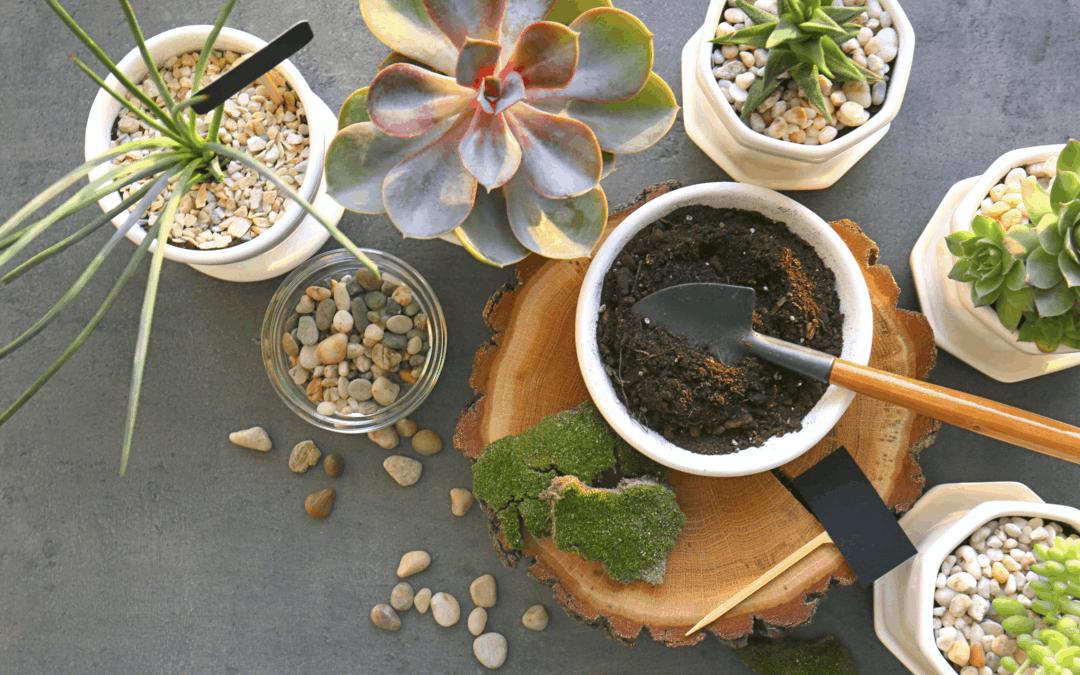 Potting Soil Vs. Garden Soil for Houseplants