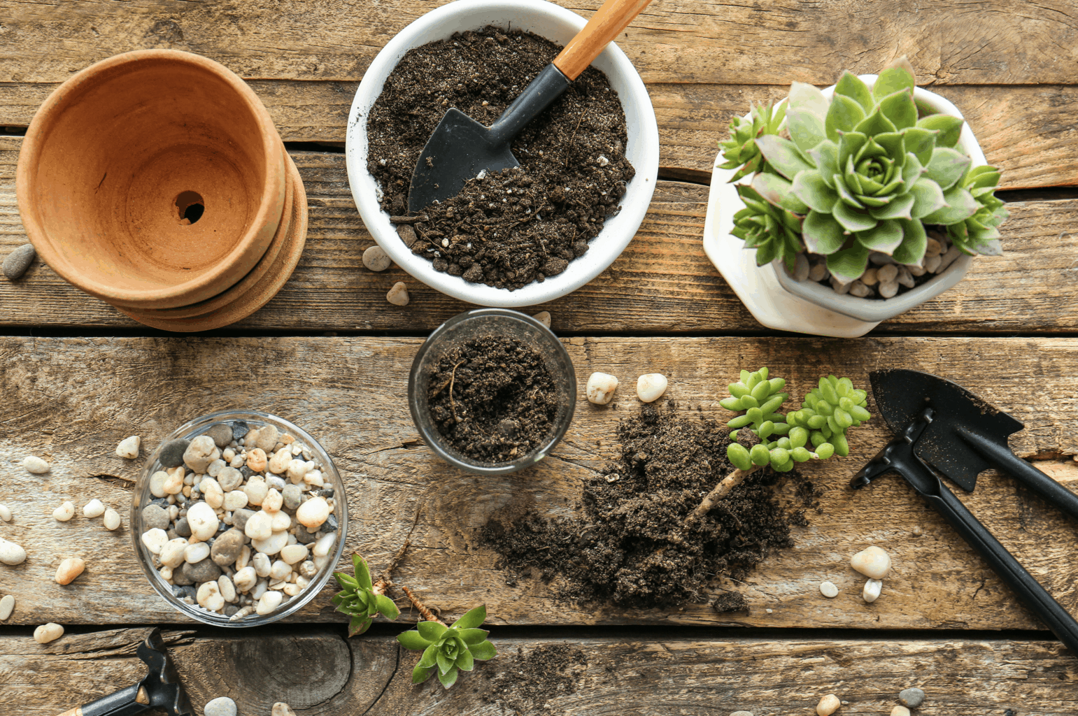 garden soil for houseplants oc succulents