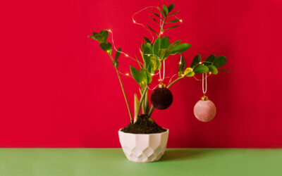 Holiday Decorating with Houseplants