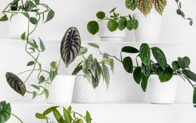 Houseplant Trends for 2021