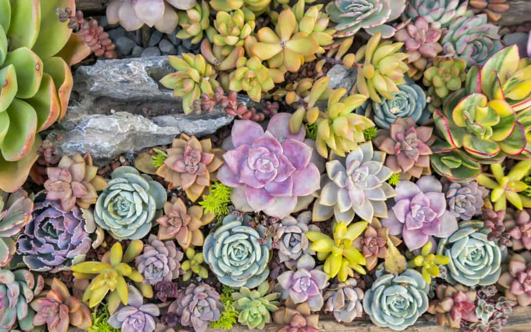 How to Design a Succulent Rock Garden