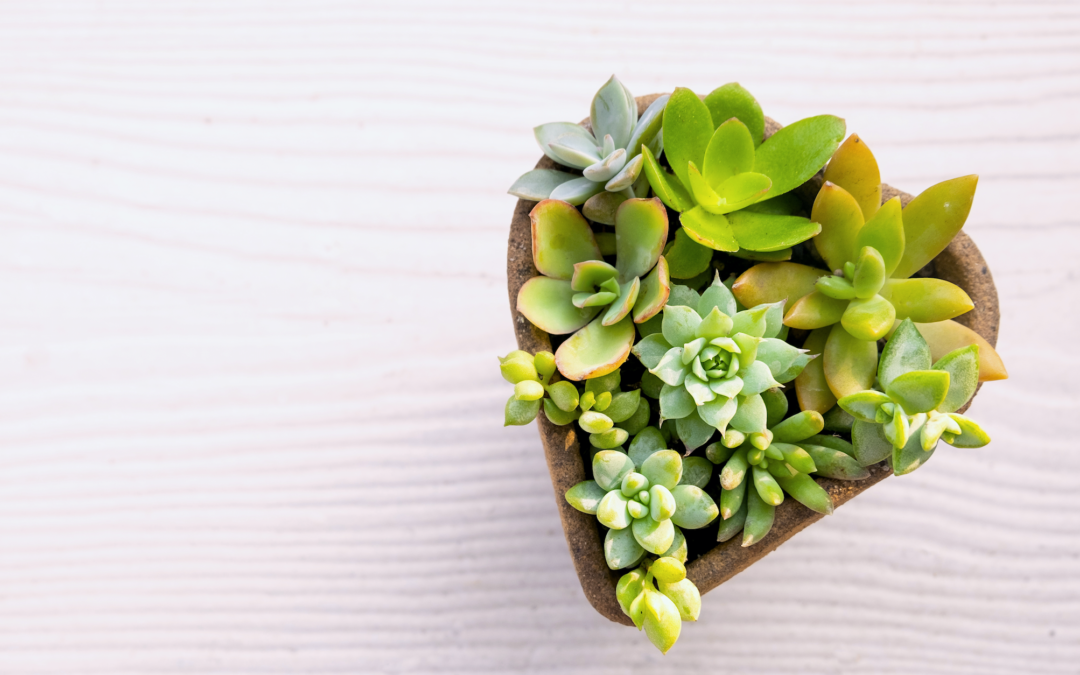 6 Romantic Houseplant Gifts to Give this Valentine's Day