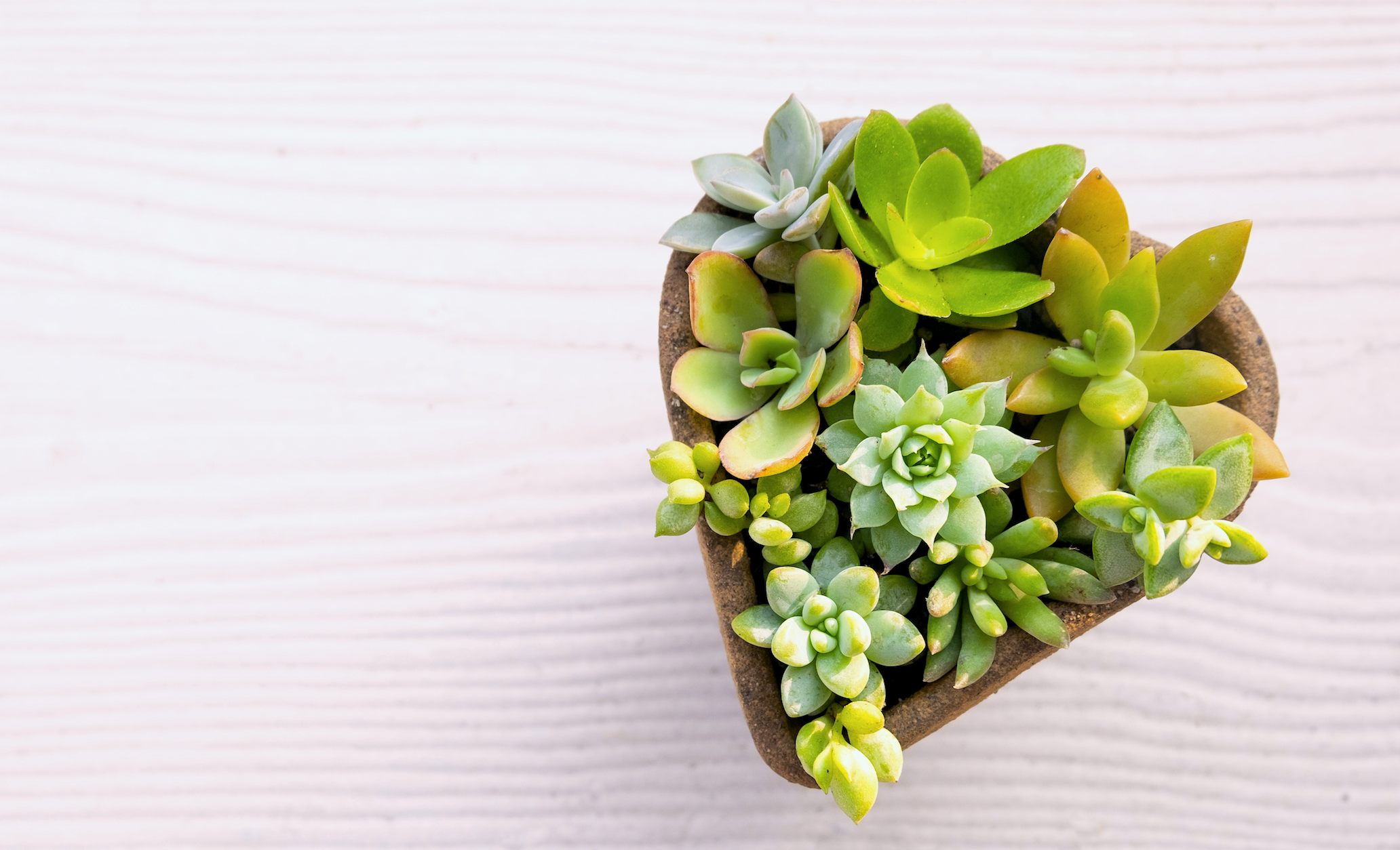 romantic houseplant gifts oc succulents
