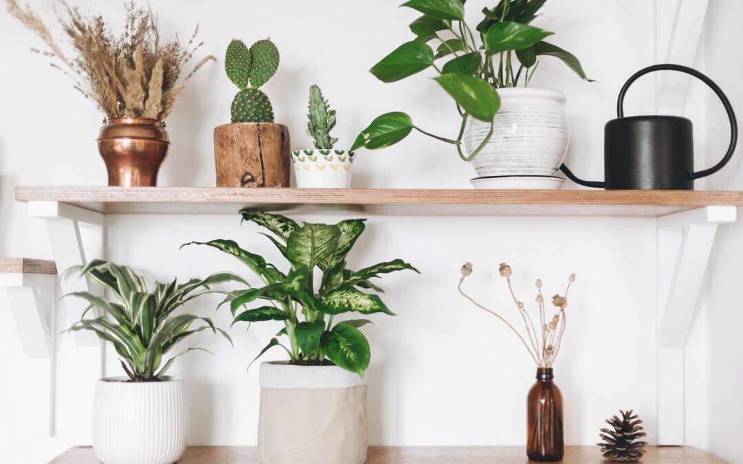 8 Low-Maintenance Indoor Plants