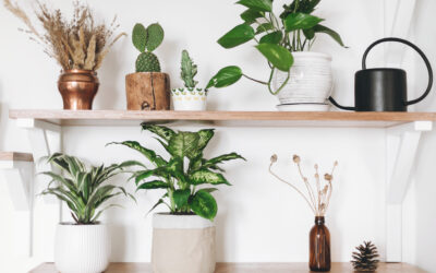 8 Low-Maintenance Indoor Plants