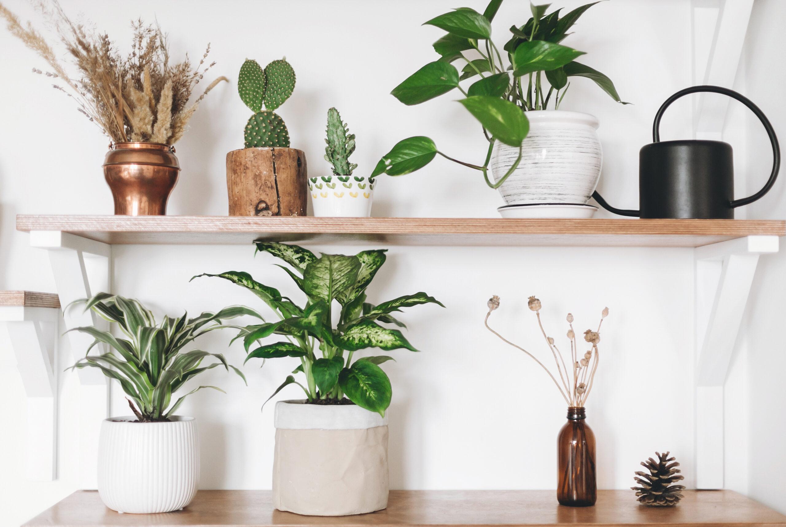 low-maintenance indoor plants oc succulents