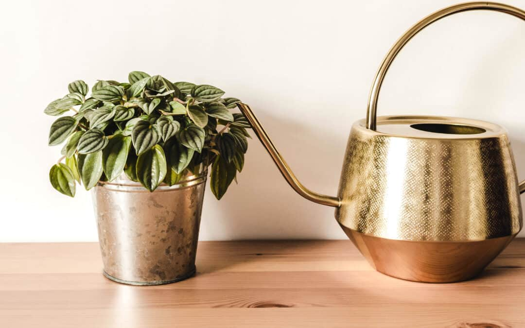 What To Use For Good Drainage In Plant Pots
