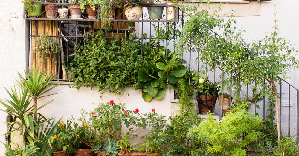 houseplant outside for summer