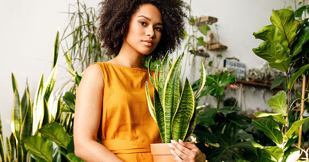 snake plants the perfect houseplant for lazy people oc succulents