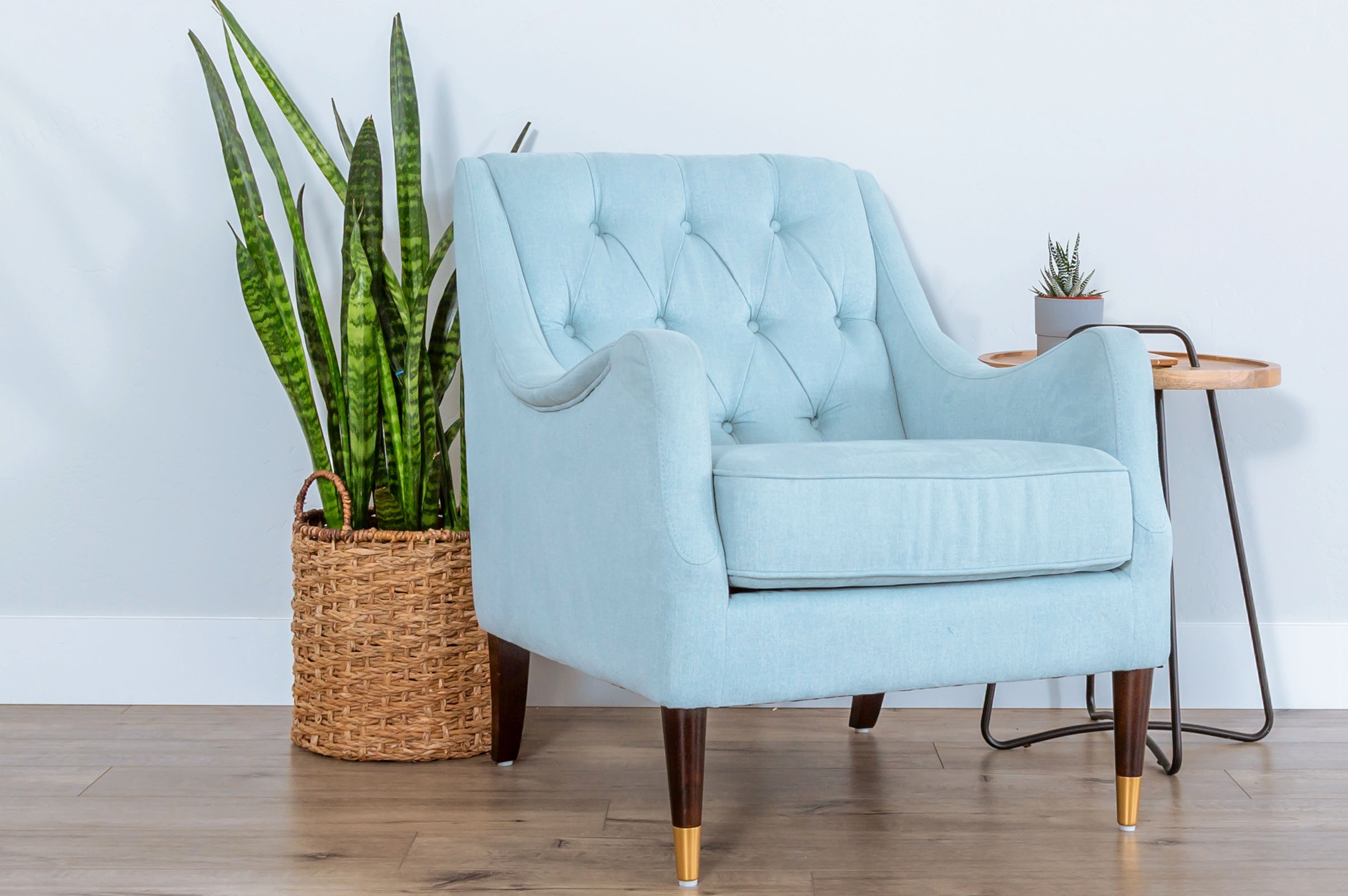 snake plants the perfect houseplant for lazy people - OC Succulents