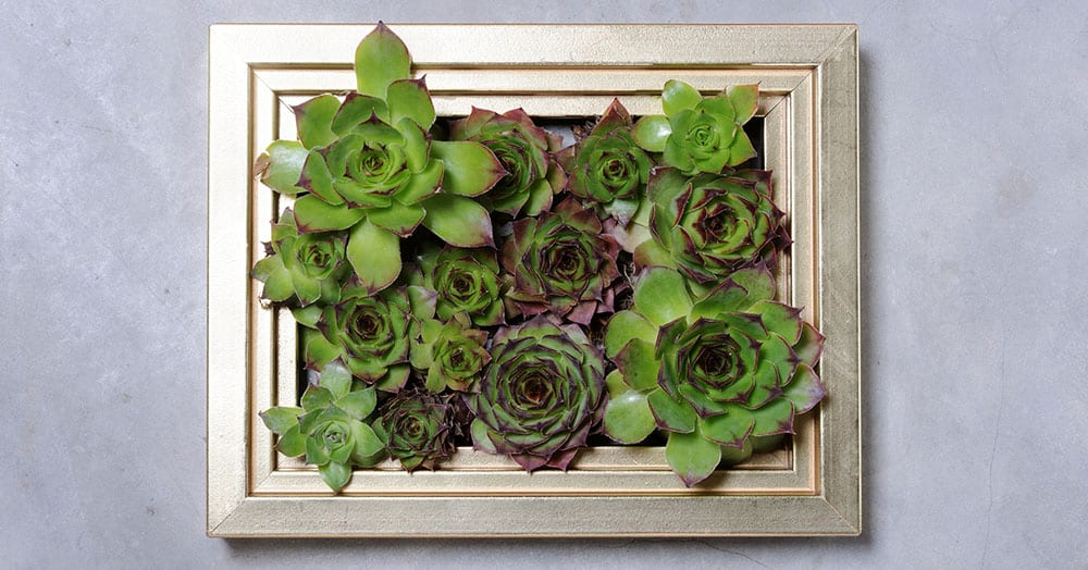 DIY-succulent-hanging-planter1