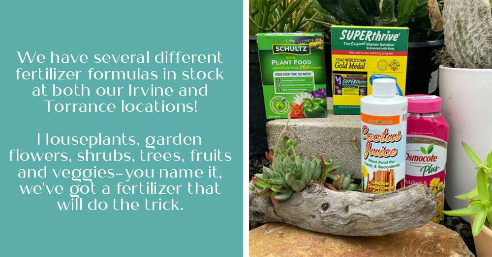 How to Fertilize Succulents OC