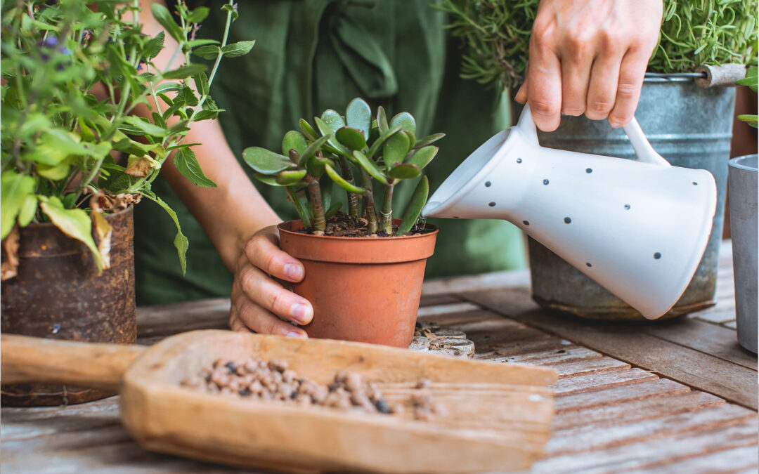 Feed Your Plants! How and When to Fertilize Succulents