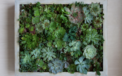 Create Incredible Living Art: DIY Succulent Wall Planters