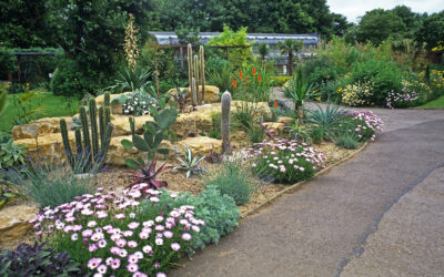 Drought-Tolerant Plants And Other Water-Wise Landscape Trends