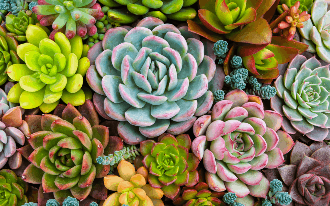 Sunny Succulents: The Trick to Making Your Plants More Colorful